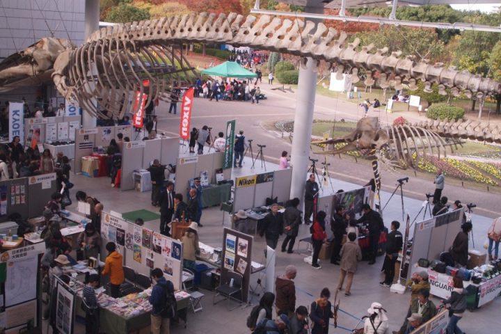 大阪自然史フェスティバル 会場