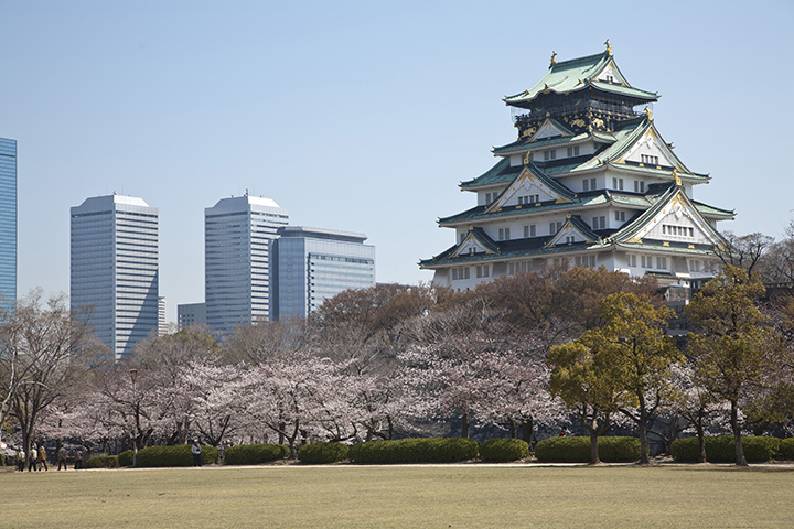 大阪城公园的樱花