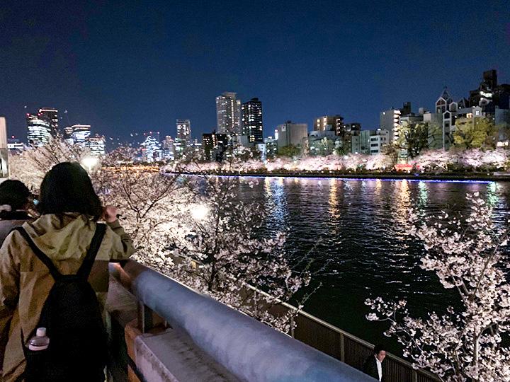 天满桥的夜樱