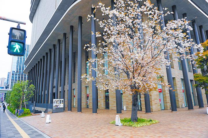 乘坐Osaka Metro发现的公园和路边的樱花们