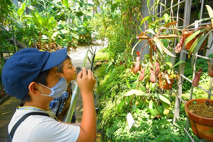 the Carnivorous Plant Exhibition 2020 at the Sakuya Konohana Kan