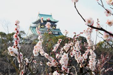 大阪城天守阁和梅林