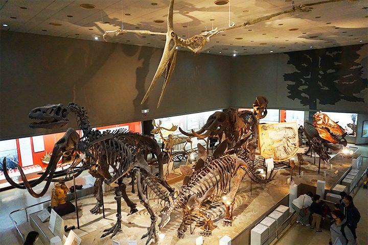 大阪市立自然史博物馆 恐龙的骨骼标本