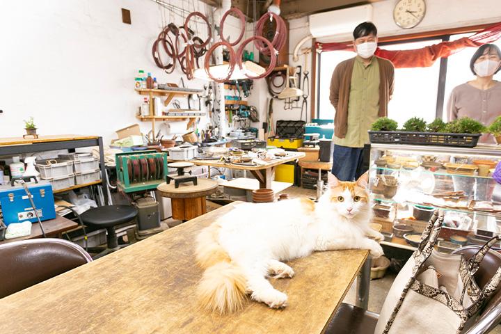 """在大阪想买盆栽就去""""BONSAI LABO 凜"""""""