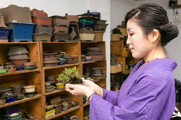 松盆栽的代名词--黑松