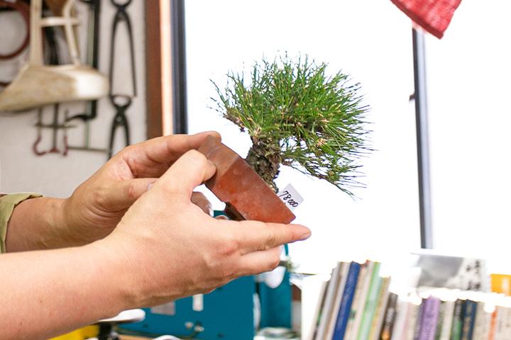 表皮层叠、带有厚重感的树干皮